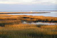 Assateague Salt Marsh