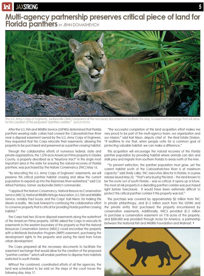Image of Panther article